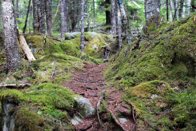 Inland off the Coastal Trail