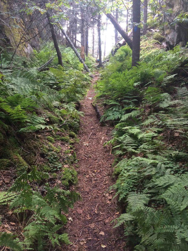 Trail below Campsite #1. Fairy Head, Cutler Coast.