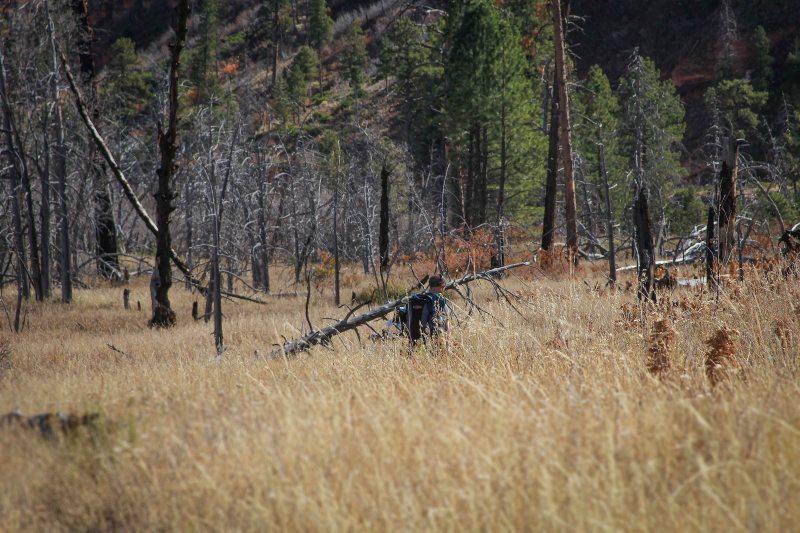 Kyler backpacks through the tall grasses leading toward Potato Bottom.